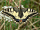 machaon_ms2